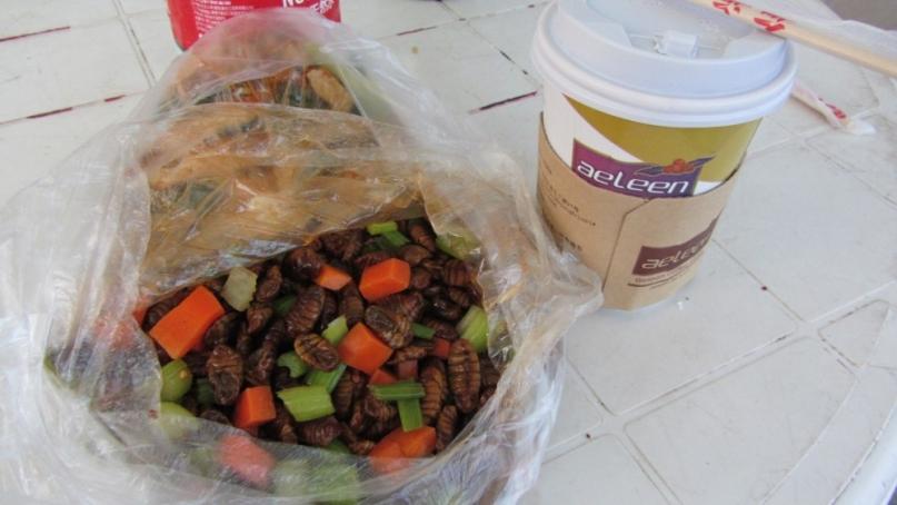 Maggots and coffee