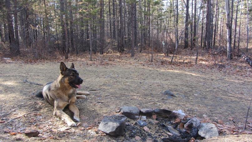 Taiga dog fireplace