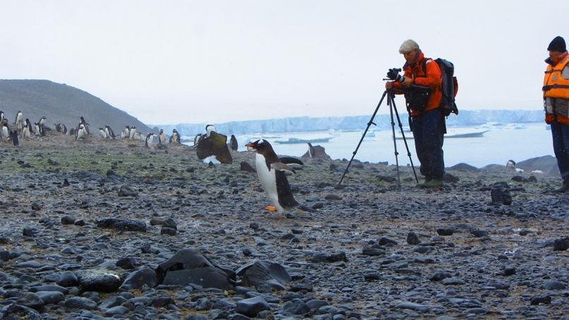 Camera tripod Antarctica