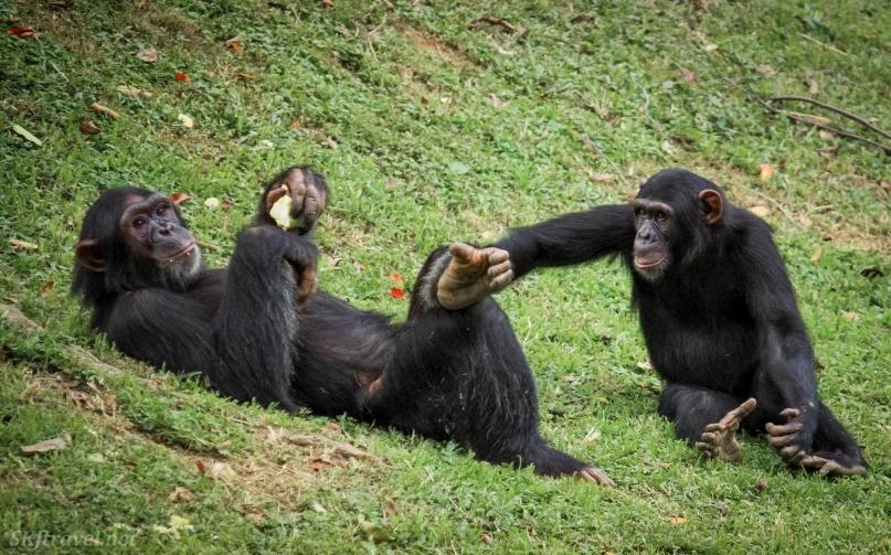 Volunteering at the Uganda Wildlife Education Center