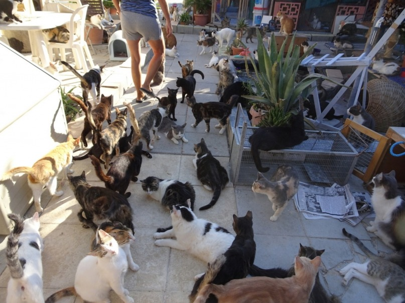 Working with over 800 cats at the Tala Monastery Cats of Cyprus