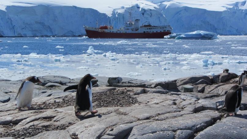 Penguin boat Antarctica